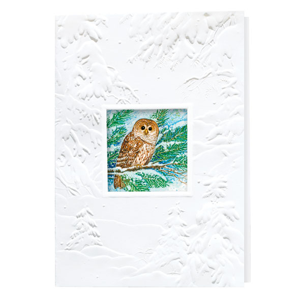 Barred Owl Merry Christmas Card Set of 20 - View 2